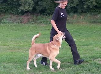 Fußlaufen Begleithund Problemhund Familienhund