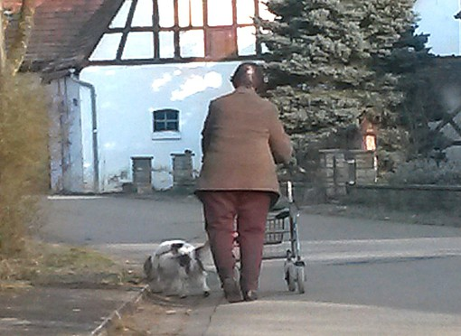 Senioren Begleithund