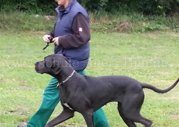 Begleithund fuss laufen Hundetraining