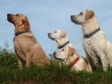 Hunde Rassen Welpen Erziehung Ausbildung Schule