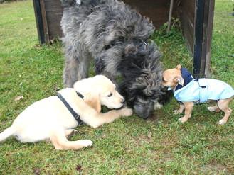 Spiele Gruppe Hunde