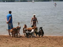 Hundespaziergang zum Altmühlsee